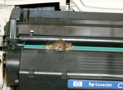 Mouse Stuck in a Toner Cartridge