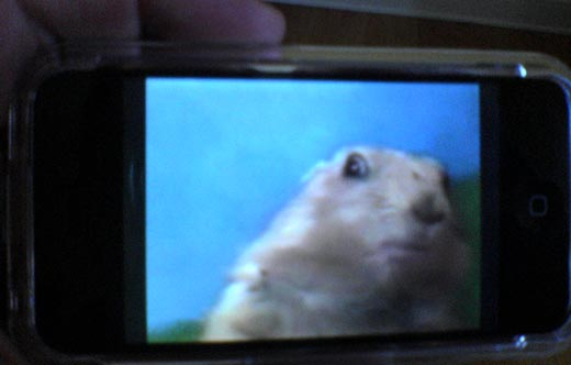 dramatic chipmunk on iphone