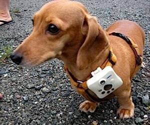 Doggie Cam Takes Dog's Eye View Photos