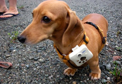 Tomy Wonderful Shot Dog Cam