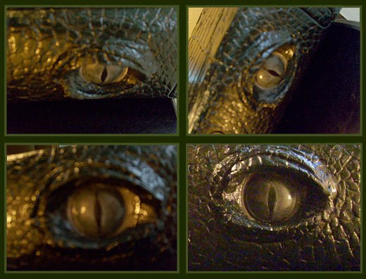 gator xbox 360 eyeball