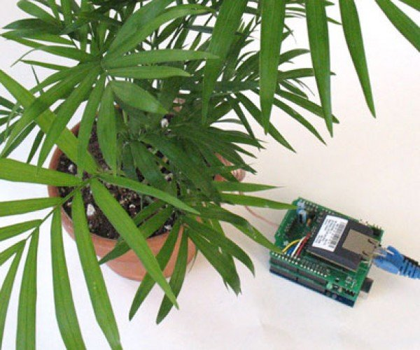 Your Plants Can Talk (via Twitter)