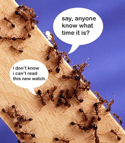 ant_humor