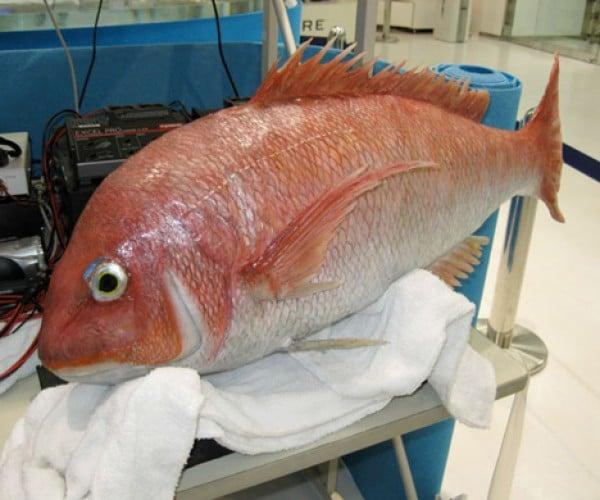 Fishbot: Like a Fish but More Robotic
