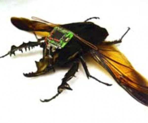 Resistance is Futile: Radio-Controlled Cyborg Beetles