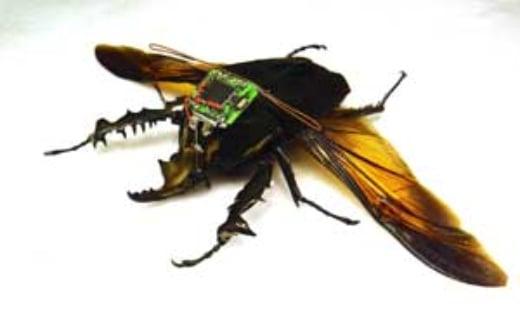beetle-borg1