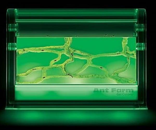The Real Alien Ant Farm