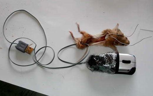 dead_mouse_insides