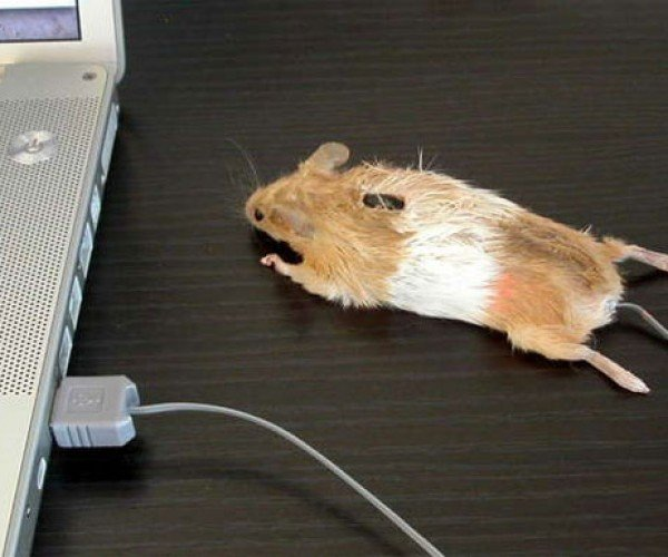 Dead Mouse Mouse: Worst Mouse Mod Ever