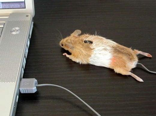 dead_mouse_mouse
