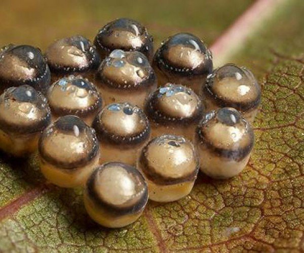 Weird Insect Eggs Don't Need No Special Effects