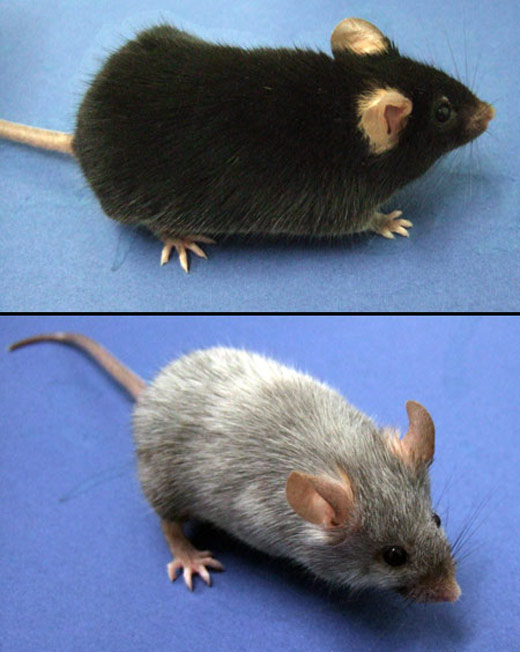 poor-mouse