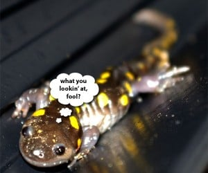 Study on Salamanders May Hold Key to Human Tissue Regeneration – or a Monster.