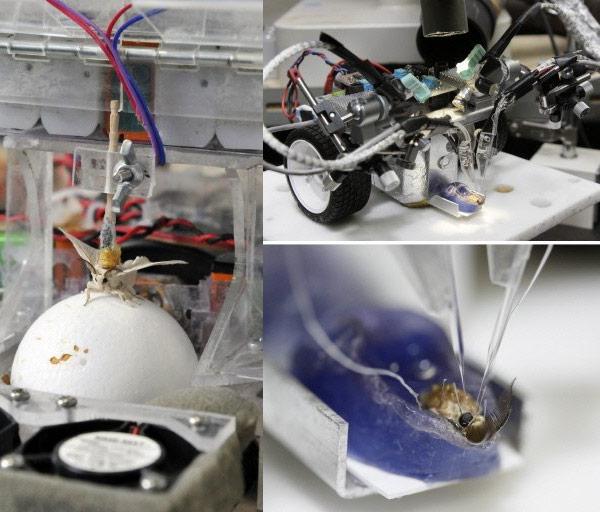 japan moth robot