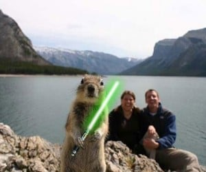 Animals With Lightsabers: Rawesome