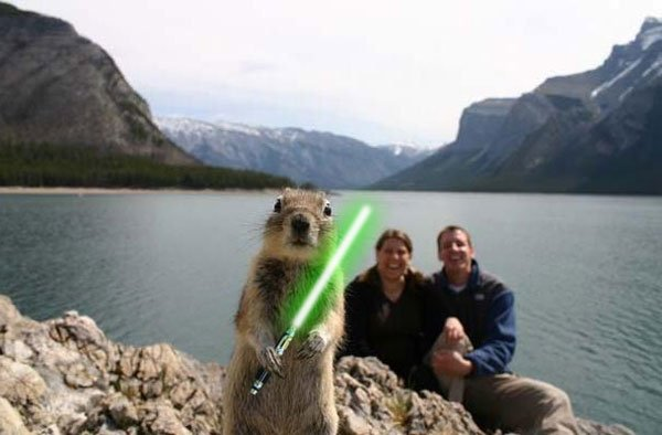animals with lightsabers 1