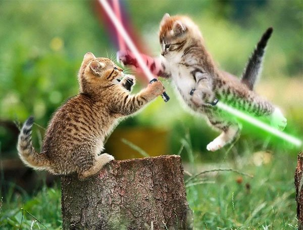 Animals_With_Lightsabers_4