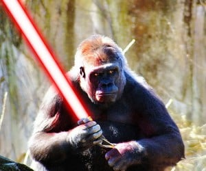 animals with lightsabers 7 300x250