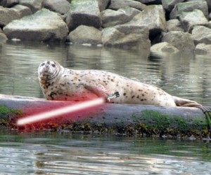 Animals_With_Lightsabers_8