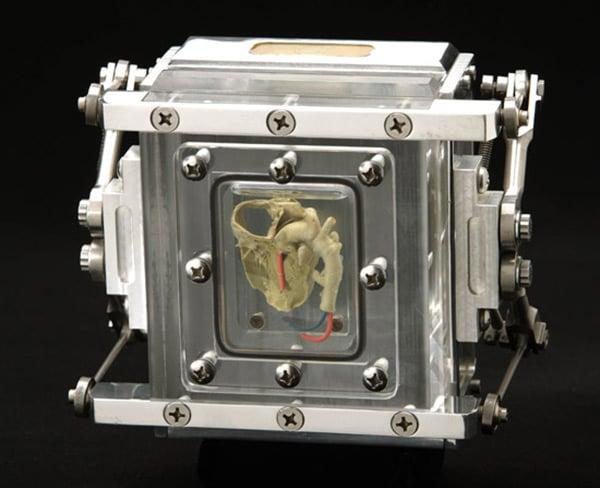 heart camera back
