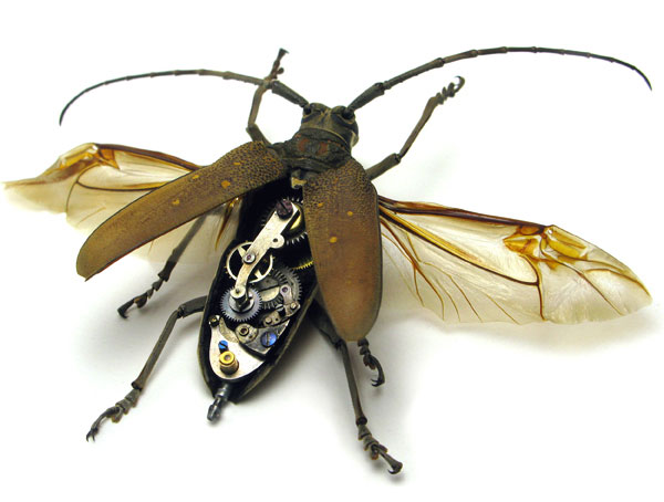 Insect_Lab_Steampunk_Beetle_2