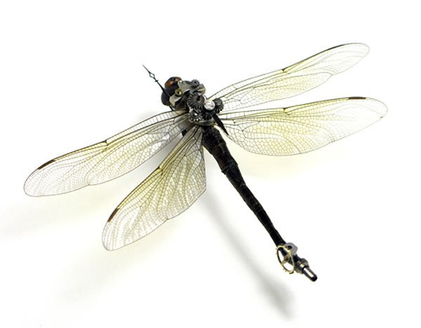 Insect_Lab_Steampunk_Dragonfly