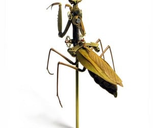 Insect_Lab_Steampunk_Mantis