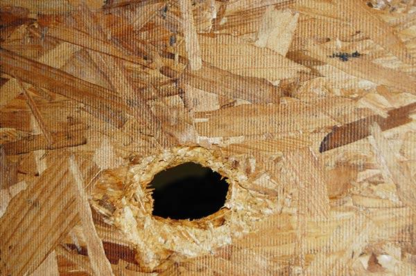 ping-pong-gunned-plywood