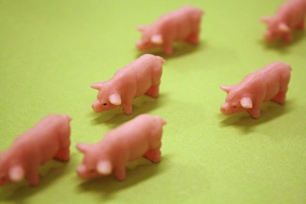 plastic-pigs