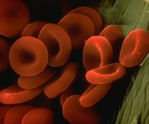 Synthetic Red Blood Cells Being Developed, Conservative Vampires Condemn It
