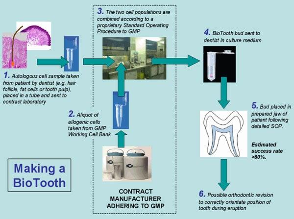 biotooth schematic