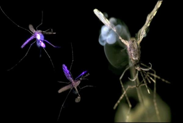 Killing Mosquitoes With Laser Beams