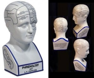 Phrenology Head: What'S Really Going on Inside That Brain of Yours