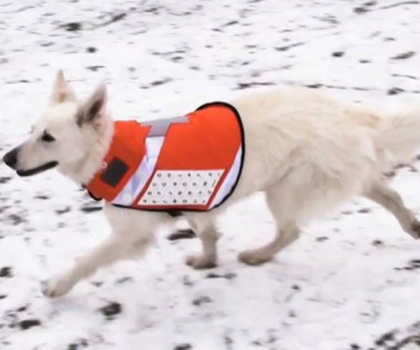 Messenger Dog: a Phone on All Fours