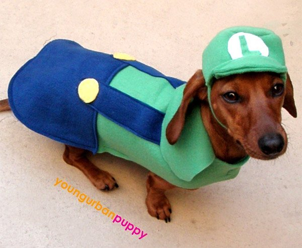 luigi dog costume