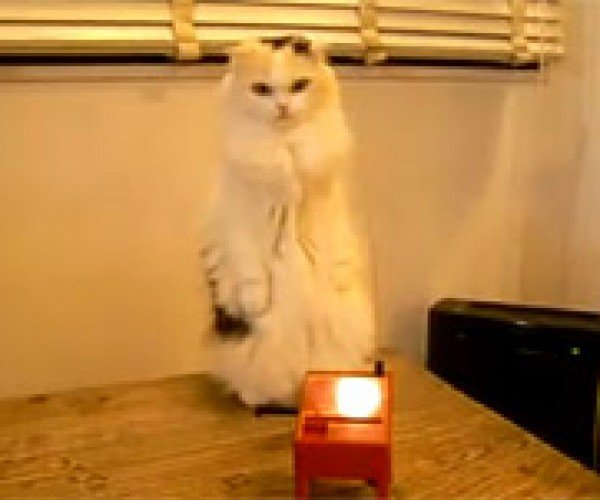 Cat Plays Theremin, Humans Plug Ears