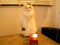 theremin_cat