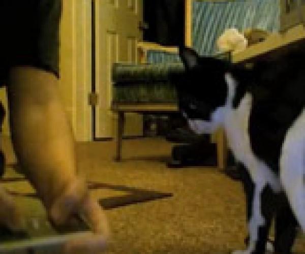 Cat Hates Nintendo