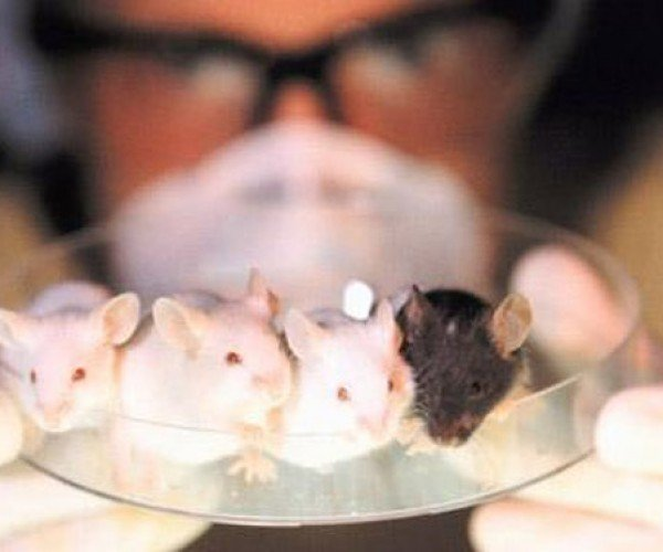 Female Mice Attracted to Same Sex After Genetic Modification