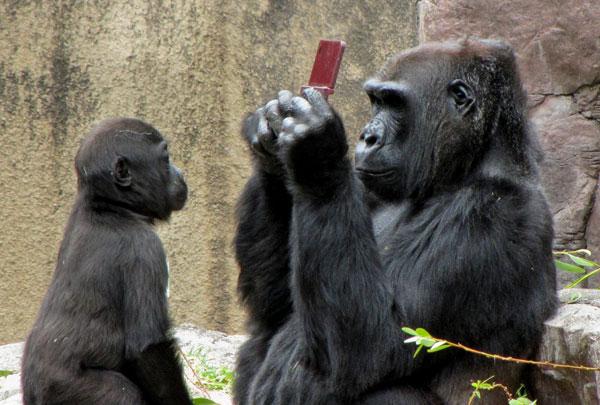 gorillads tb