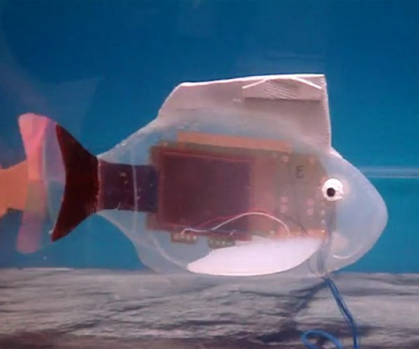 Robo-Fish Gotta Swim