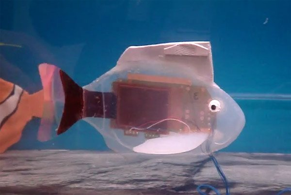 robot_fish