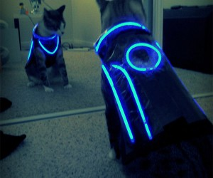 TRON Cat Costume is Way More Entertaining than TRON:Legacy