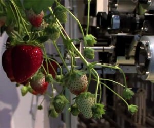 Strawberry Picking Robot Wants to Gently Handle Your Berries