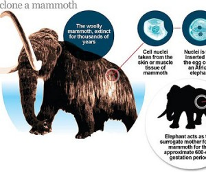 Cloning Woolly Mammoths: Nothing Could Possibly Go Wrong