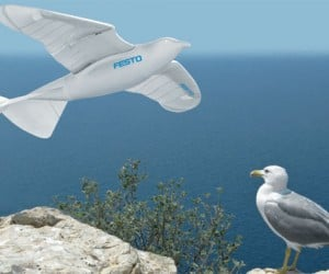 Festo SmartBird Flaps its Wings into the Sky