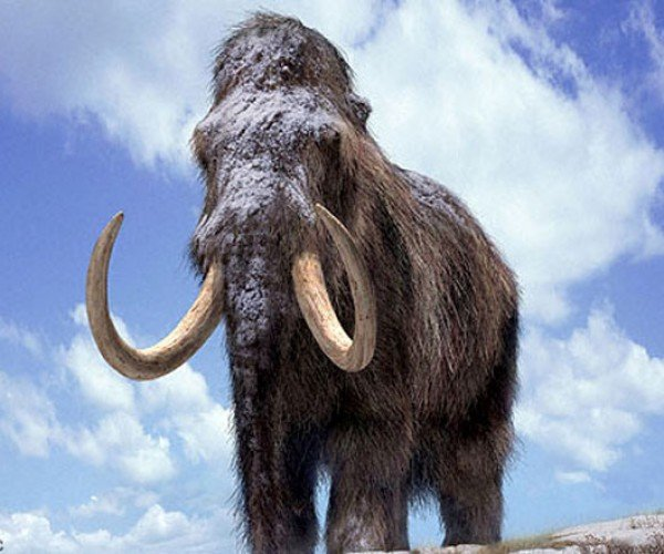 Ancient Mammoths Discovered in California