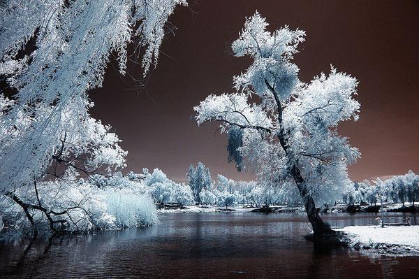midnight shot ir infrared camera digital thinkgeek