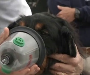 Fire Trucks Finally Get Pet Oxygen Masks