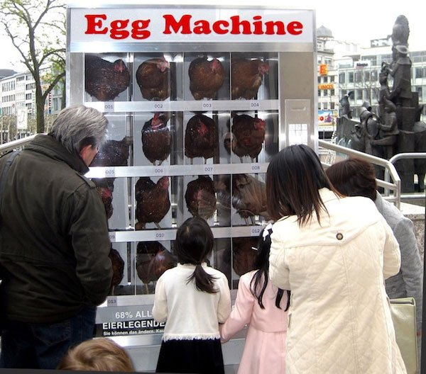 Egg Machine Puts Live Chickens In Vending Machine